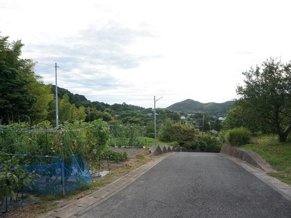 近所の緑、畑。スローな時間、流れてます。