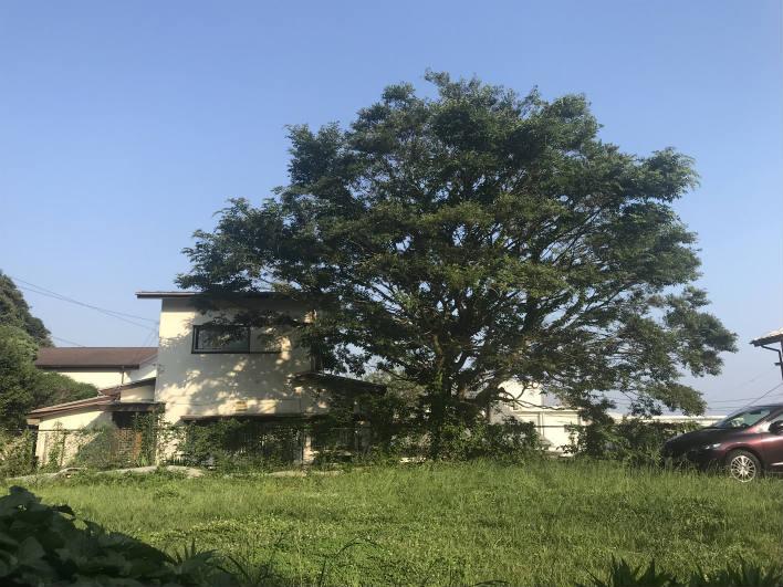 敷地の真ん中にある あの木が気になるのです