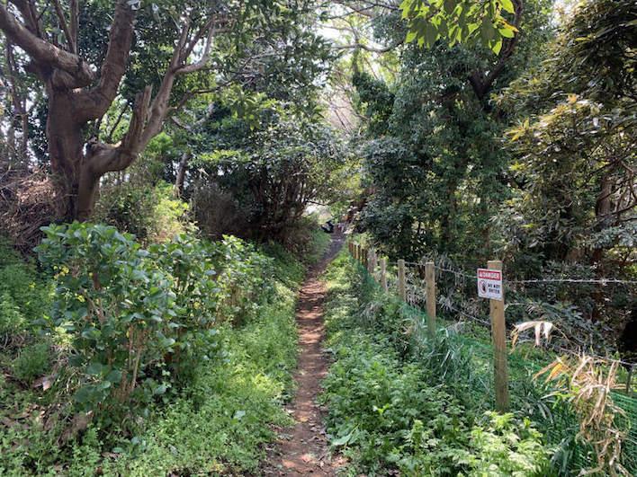佐島の丘分譲地まで続き横須賀市道。かなりワイルド目です。