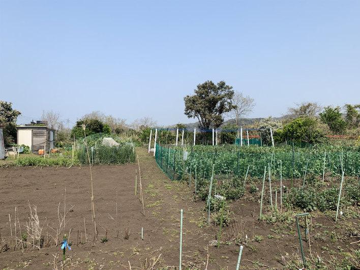 物件の裏です。この畑は佐島の丘まで続きます。