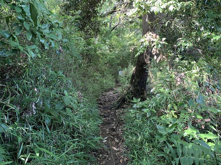 六国見山に入っていく道です。かなりワイルド