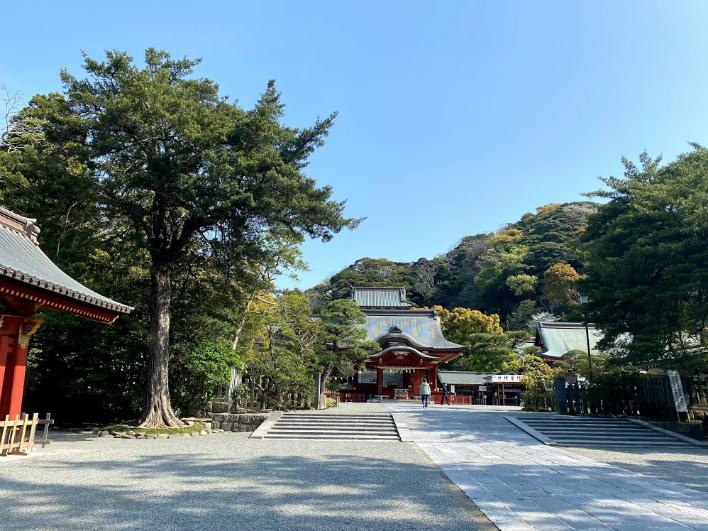 朝いちばん。ひとがすくない鶴岡八幡宮。願い事も叶う気がする。気持ちがいい!