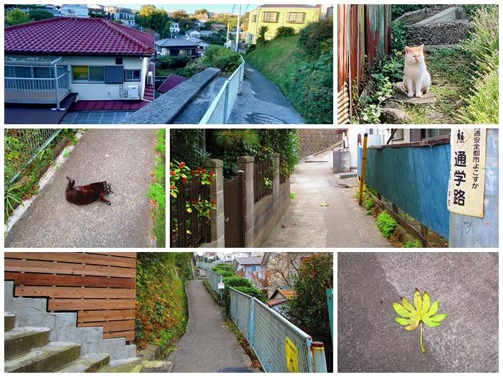 駅と物件の道中。猫は友達。歩くのが楽しい。