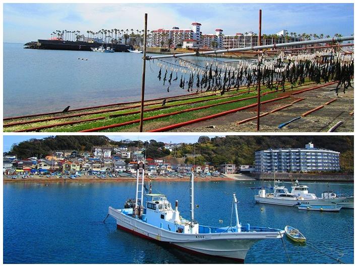 小坪港。ワカメ越しの逗子マリーナも係留された漁船も絵になる。