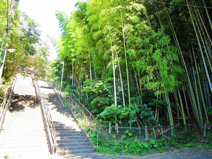 本家・鎌倉山にはこちらの階段からどうぞ。