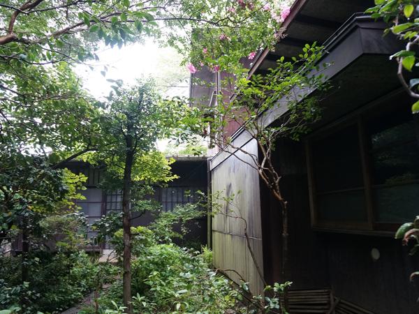 緑と共存しあう、建物。もののけ姫に出てくる森のような神聖さが漂う。本物だ!